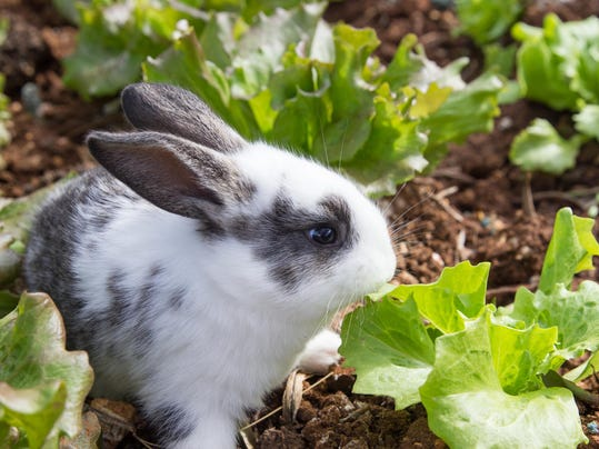 Keep Deer Rabbits And Other Pests Out Of Your Garden