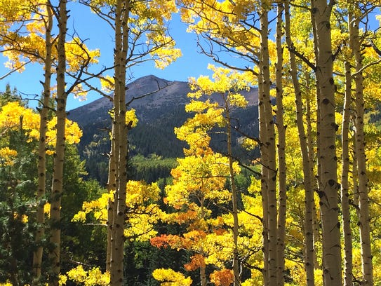 Coconino National Forest The aspens around the San