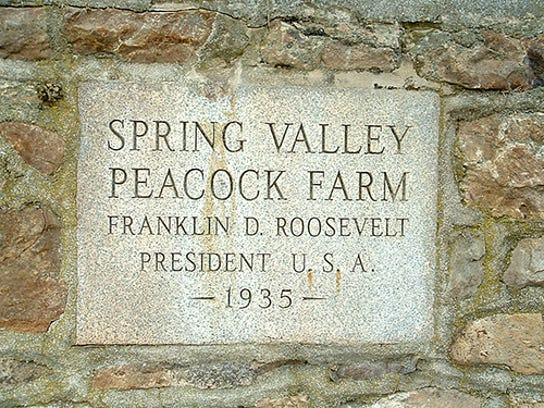 Spring-Valley-Peacock-Farm-1-blog