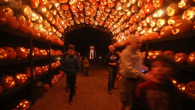 People make their way through a tunnel of Jack O'Lanterns at the Great Jack O'Lantern Blaze at Van Cortlandt Manor in Croton-on-Hudson.