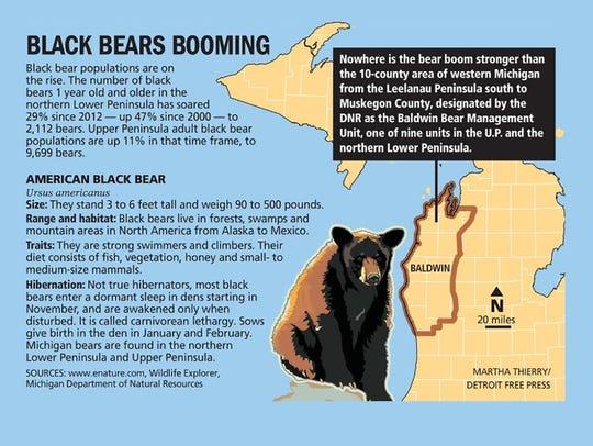 Black bears booming
