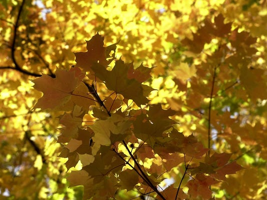 Title: Fall leaves 3