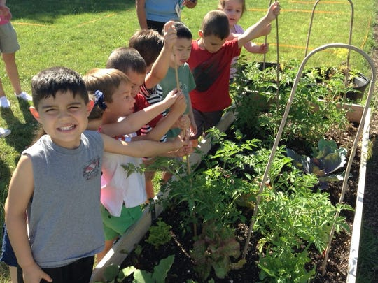 Kindergartners help stake tomatoes in the new garden at Mt. Horeb School.