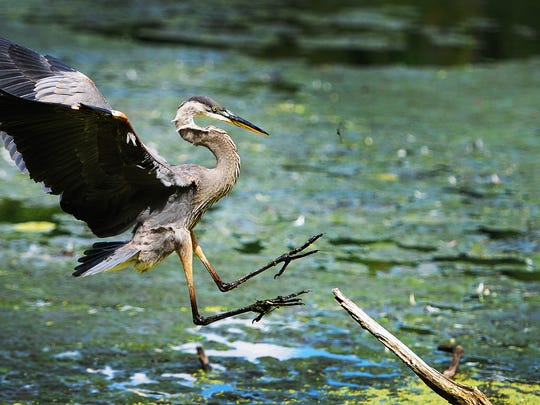 130250 WYCKOFF 08/17/14 