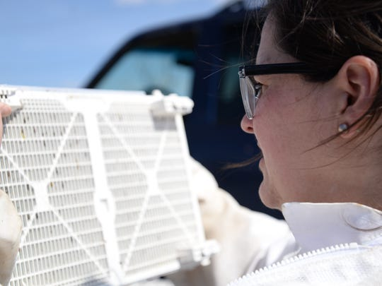 Cathy Wright looks at the bees through a package as they poke their heads and eyes out. Valley Bee Supply had a pick-up location for customers who preordered bees.