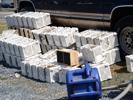 Fans cool off packages of bees off U.S. 250 in Fishersville.