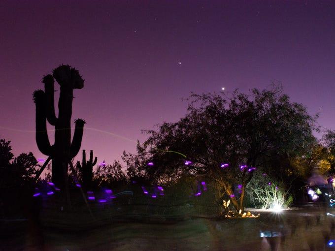 Through 9/3: Flashlight Tours at Desert Botanical Garden