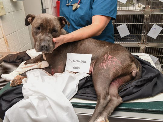 A badly wounded dog was found Tuesday, Aug. 25, discarded on Sheboygan's south side. The dog died days later at the Sheboygan County Humane Society.