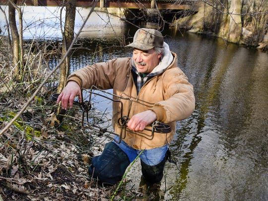 Pete Jonas resets one of his beaver traps Saturday,