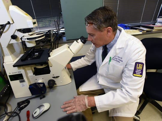 Associate Professor Ronald Klein, Ph.D. looks at a sample under the microscope in his lab at LSU Health. He and his team are working on a way to cure ALS.