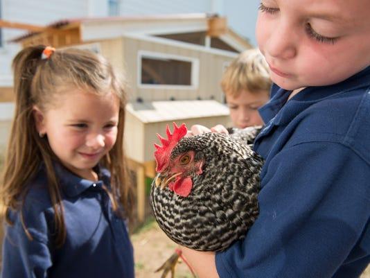Purina-School-Hen