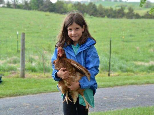 Emily Ward, 7, of Waynesboro holds a chicken at the Kites and Critters event on Bells Lane in Staunton on Sunday, April 23, 2017.