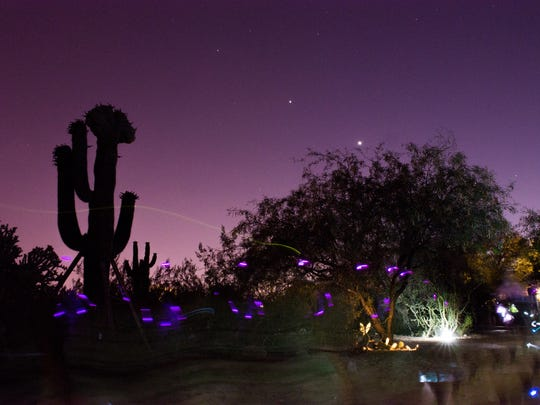 Visitors with light-up jewelry walk along a trail at a flashlight tour at the Desert Botanical Garden.