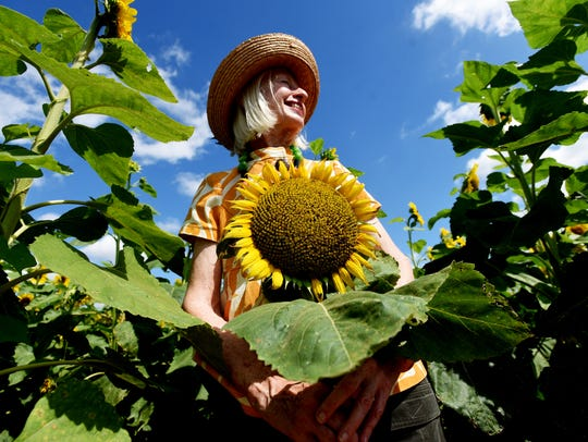 The 19th Sunflower Trail & Festival is June 17. The