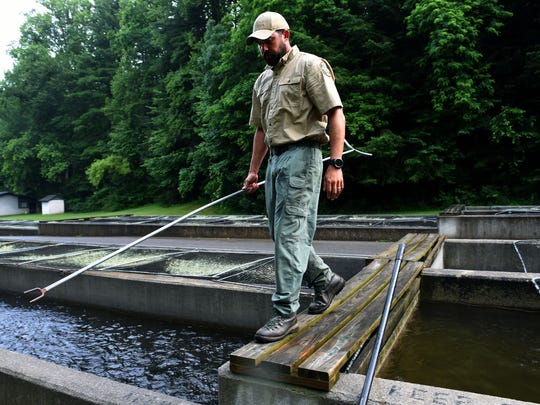 Jon Ellis runs the Tellico Fish Hatchery in Tellico Plains, where they supply trout for several streams.