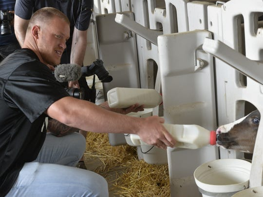 Kyle Rudolph, tight end for the Minnesota Vikings, helps feed calves on the farm Sunday, July 23, at Enchanted Dairy in Little Falls.
