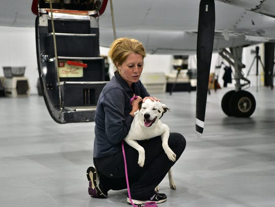 78 Rescued dogs from Texas floods arrive at Morristown