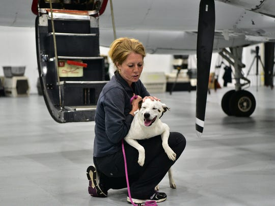 78 Rescued dogs from Texas floods arrive at Morristown airport Tuesday night. Photo: Marko Georgiev/NorthJersey.com