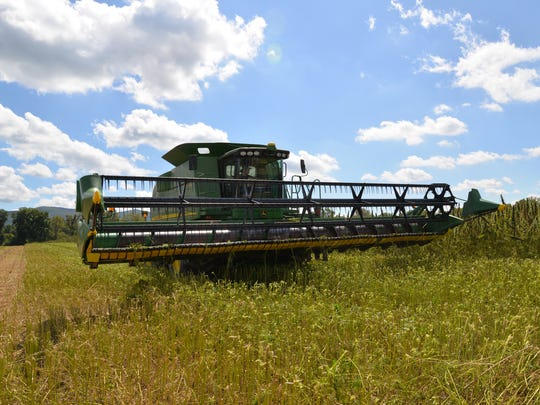 Industrial hemp being harvested by a combine out at Riverhill Farms in Port Republic, Virginia. The hemp is grown as part of a research project with James Madison University in Harrisonburg. On Friday, Sept. 15, 2017 the Virginia Industrial Hemp Coalition held a field day where hemp was harvested.