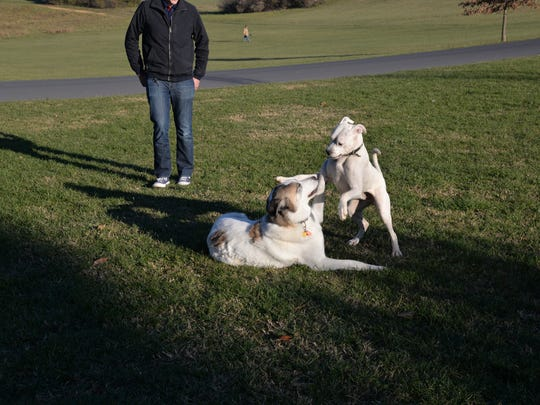 Dogs play at Coyner Springs Park in Waynesboro on Thursday, Nov. 23, 2017. Dog owners met for their annual Thanksgiving meal with their furry friends.