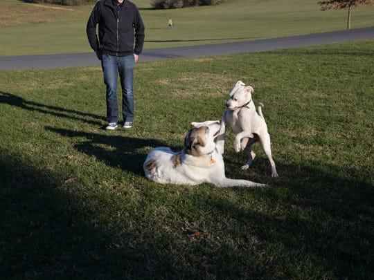 Dogs play at Coyner Springs Park in Waynesboro on Thursday,