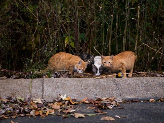 PROMO-straycats.JPG