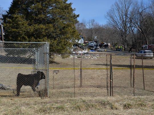 Cow at a small farm near the Crozet train crash.