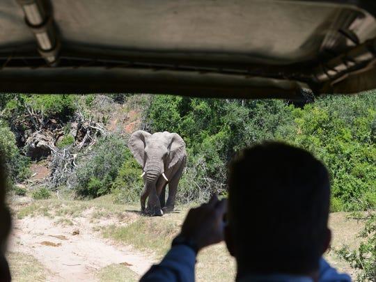 A Crystal Symphony passengers snaps a photo of an elephant