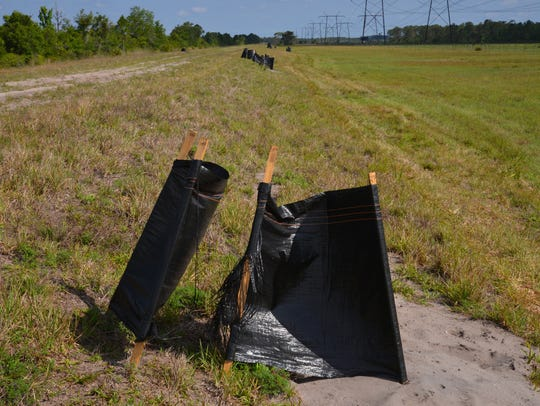 Bucket traps set up with shade cloth along the levee