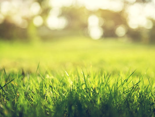 #stock Grass Yard Stock Photo