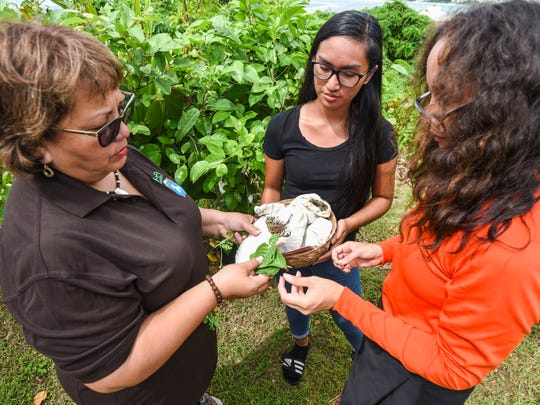 Zita Pangelinan, left, Håya Foundation president, explains the usage of local herbs and plants during a quick demonstration of traditional Chamoru åmot healing to Pineksai Håya participants, Riennel Aquino, 16 and Dominica Yee, 17, right, at the Sågan Kotturan Chamoru Cultural Center in Tamuning on Friday, Aug. 3, 2018.
