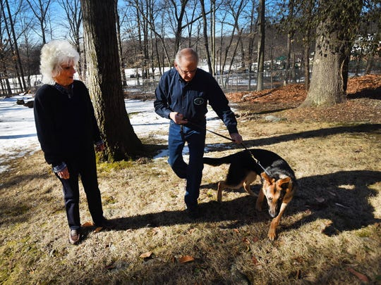 Sheila and Roger Woodhour of Woodcliff Lake, who volunteer to raise puppies for The Seeing Eye in Morristown, walk their 31st puppy, 7-month-old Zeiss, a German shepherd. The couple have been doing this for 25 years.