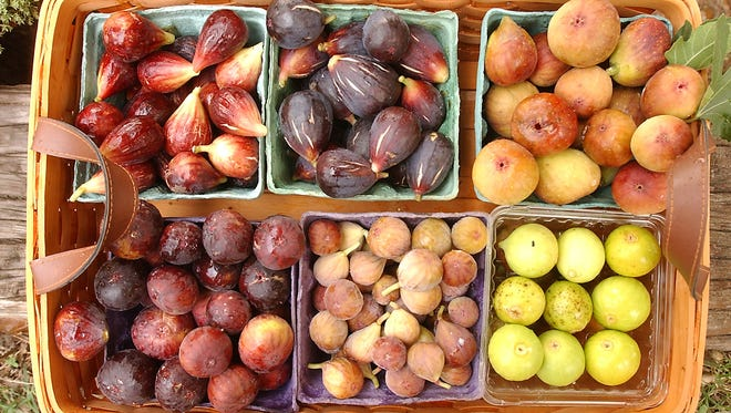 Six varieties of figs grown by Bill Colvard ( include (TOP ROW Left to Right) LSU Purple, Bordeaux and DeMarco.  (BOTTOM ROW Left to Right) Brown Turkey, Celeste and Pete's Honey.