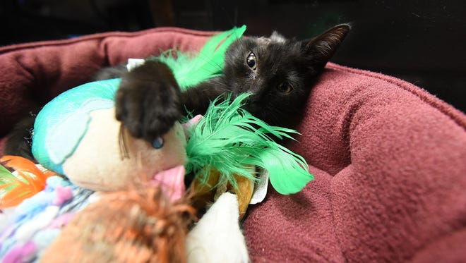 Vandy is healing from her surgery. She will not be up for adoption, instead she will live with Humane Society of Richland County shelter director Missy Houghton. Vandy will spend several days a week at the shelter, acting as a mascot.