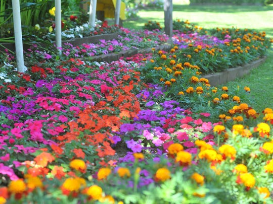 Different rows of flowers at Jerry and Linda Standiford's yard.