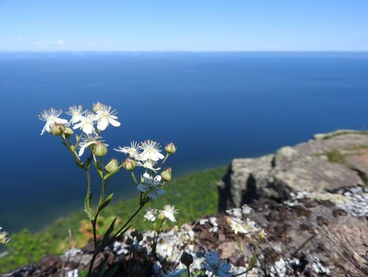 636039421720126697-three-toothed-cinquefoil-sleeping-giant.jpg