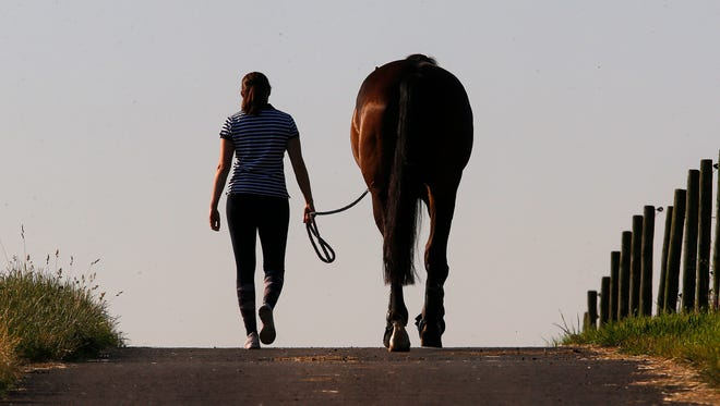 A woman leads a horse to its paddock in the outskirts of Frankfurt, Germany.