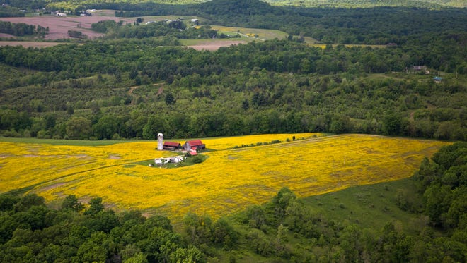May 13, 2016: Canola fields are seen from above in Pike County in the spring. One-fifth of Pike County residents don't hold a high school diploma or GED and just 11 percent hold bachelor's or advanced degrees.  That has left residents to rely heavily on those they trust to stitch together a patchwork of jobs largely learned and passed down through generations: They tend crops, cut trees, work at mills, fix cars and other machinery. Many often trade for goods and services when money runs low.