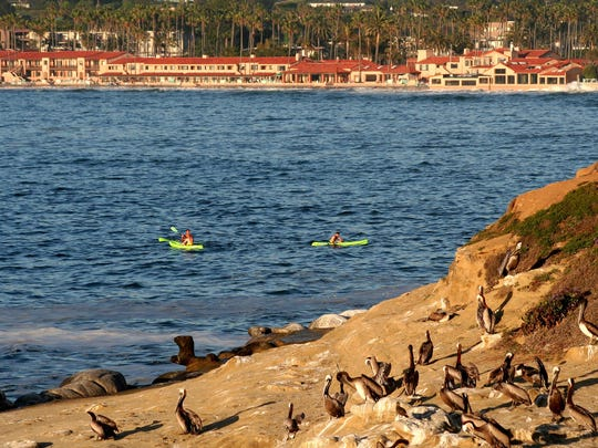 Whether kayaking, snorkeling, swimming or even wading, you can experience the leopard sharks off La Jolla.
