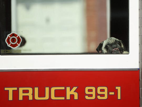 Otis waits in a fire truck for his owner after being