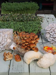 Some of the gourmet mushrooms, sprouts, shoots and edible flowers grown by Little Sprout Farms.