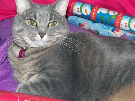 Angie's cat, Dusti, enjoys opening presents filled with catnip.