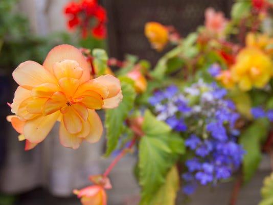635718643176924010-LACASA-garden-Thomas-04
