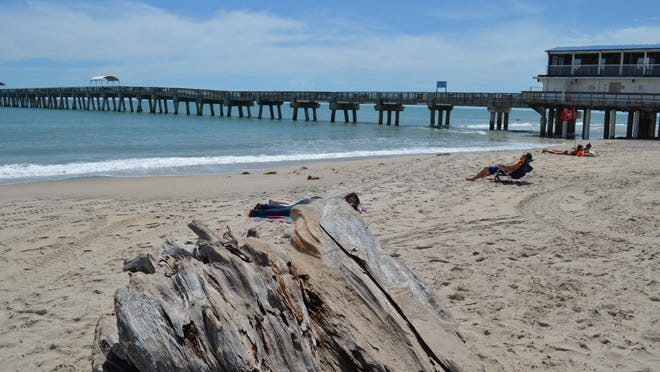 Residents tan and relax near a giant piece of driftwood washed up by Dorian on Lake Worth Beach.
