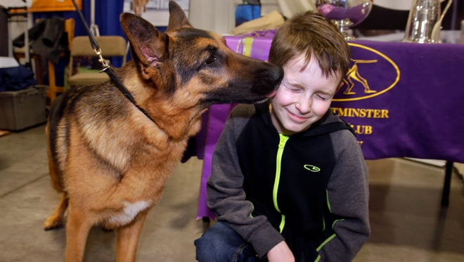 Rumor, the German shepherd that won the Best of Show at the Westminster dog show, licks  Mason Doll, 10, of Milwaukee on Thursday at the Milwaukee Journal Sentinel Sports Show.
