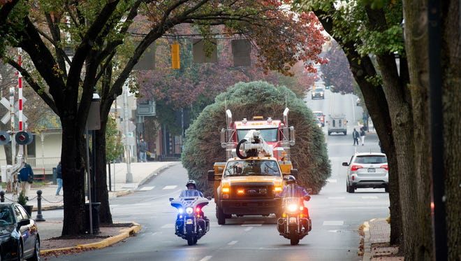 The York Christmas tree arrives on West Market Street from West Manchester Township in York Tuesday. The 30-foot blue spruce was donated by Brent Hatterer.