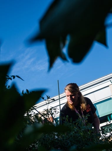 Gabriell Enoff, a food service employee at Hanover High School, works to collect vegetables from a courtyard garden. The food staff incorporates the vegetables into the student's lunch options.