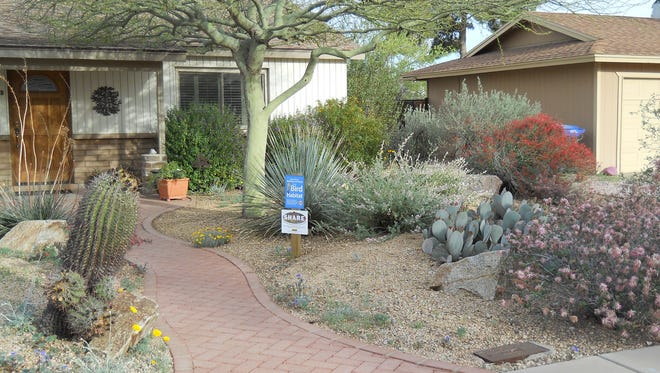 The front-yard makeover included an inviting walkway and mix of low water use plants that are native to the Sonoran and Chihuahuan deserts.