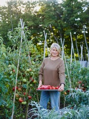 Martha with a tray of freshly picked beauties. Tomatoes