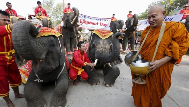 A Buddhist monk walks next to elephants during Thailand's national elephant day celebration in the ancient city of Ayutthaya on March 11, 2016.